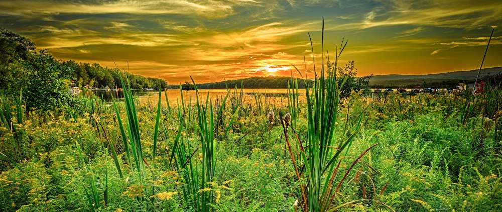 4 Beech Mountain Cat Tails HDR.jpg